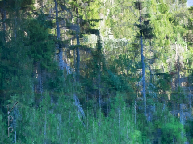 Forest, Reflected & Inverted